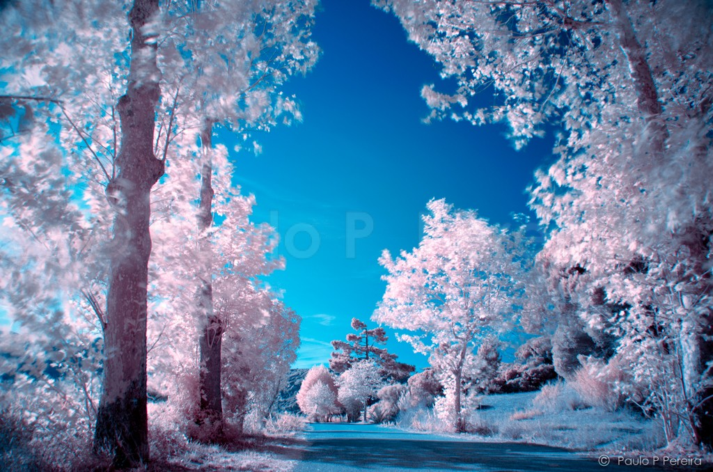 Sweet Dreams - Infrared Photography