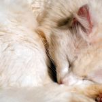 Albino cat 1997