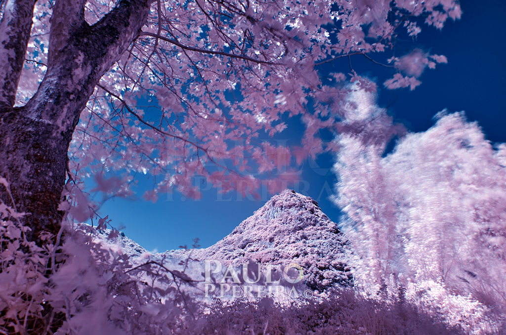 Infrared view of Fonte dos Frades