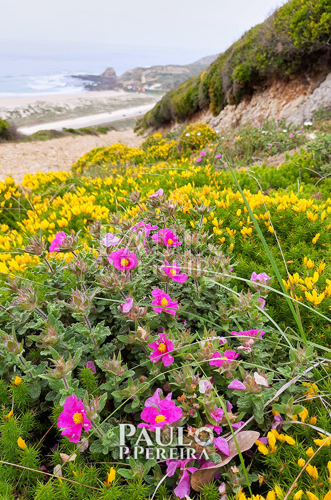 Wild Flowers - Monte de Santa Rita